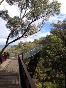 Tree top walk with river view!