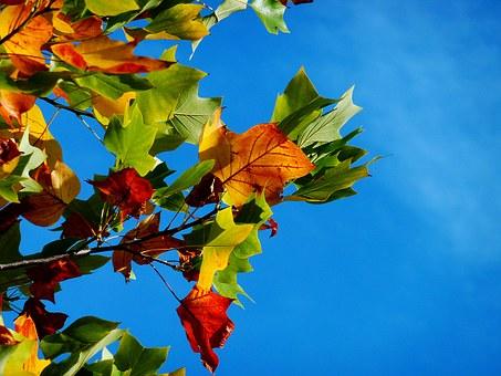 contraste d'automne