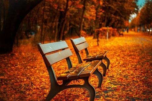photographier l'automne et composition