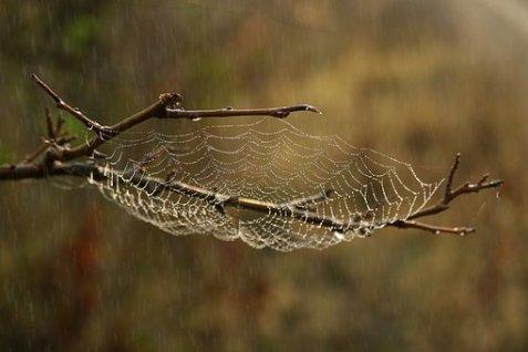 pluie sur toile d'araignée