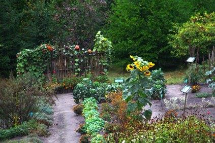 """""""Гарбузова осінь у саду"""", Ботанічний сад ЛНУ, 20 вересня 2015 року"""
