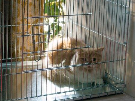 Міжнародна виставка котів у Львові