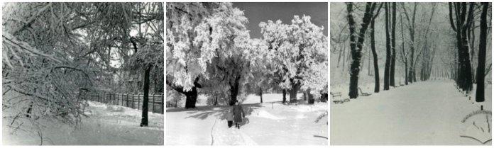 Засніжені алеї та парки Львова. Фотографії 1960-х рр.
