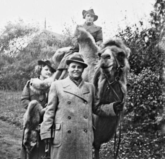 Екзеотична прогяланка верхи на верблюді. Дивує дата фото, адже воно здійснене в часи німецької окупації Львова. Фото 1941-1943 рр.