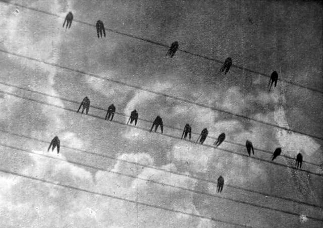 Ярослав Коваль. Ластівки на дротах, поч. 1930-х рр. (Світло й Тінь. – 1934. – Ч. 2)