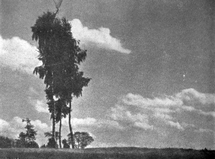 Олександер Мох. Самота, сер. 1930-х рр. (Світло й Тінь. – 1936. – Ч. 6)