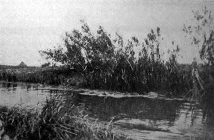 Ірина Ґурґула. Простир, 1930-ті рр. (Наша Батьківщина. – 1938. – Ч. 5)