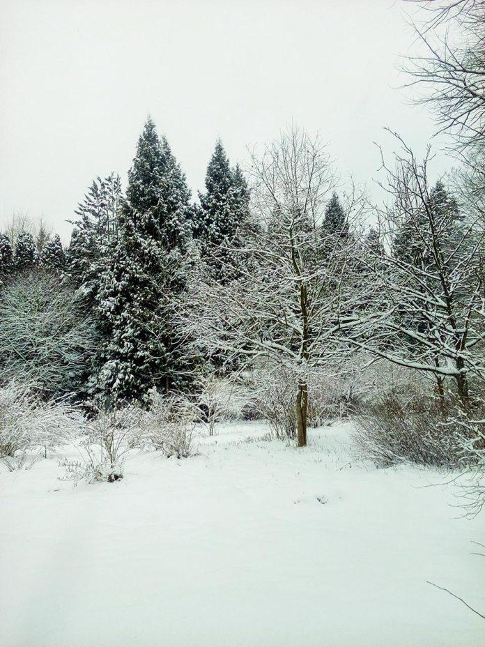 Зимовий пейзаж в дендрологічному парку, фото Ірина Хлян.