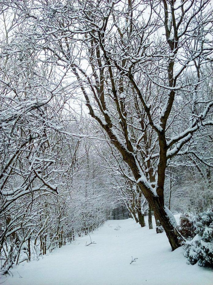 Одна зі стежок парку, висаджена деревно-чагарниковими групами, фото Ірина Хлян.