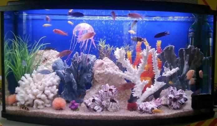 Акваріум-псевдоморе, іітація морського акваріуму.
