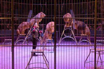 Атракціон дресированих левів під керівництвом Тайро Кароллі