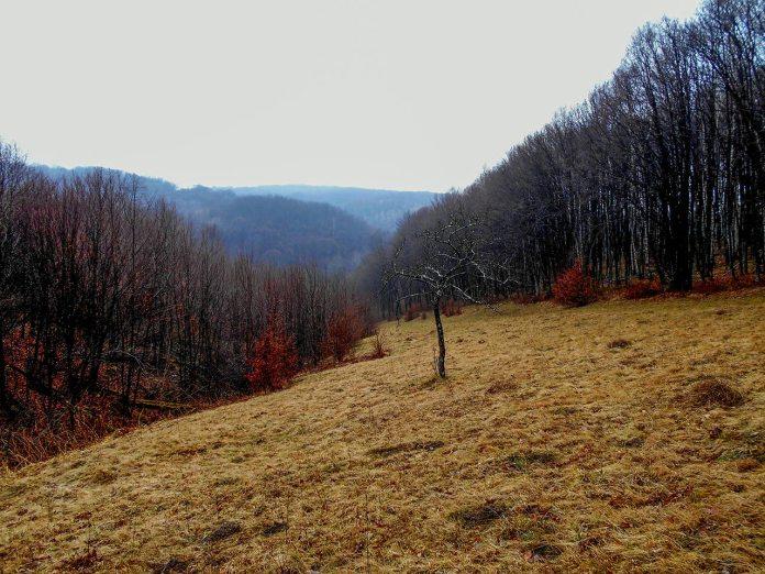Долина над річкою Колодниця. Фото Андрія Книша
