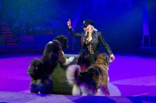 Дресировані кавказькі вівчарки під керівництвом артистки Державної циркової компанії України - Любові Тимохіної.