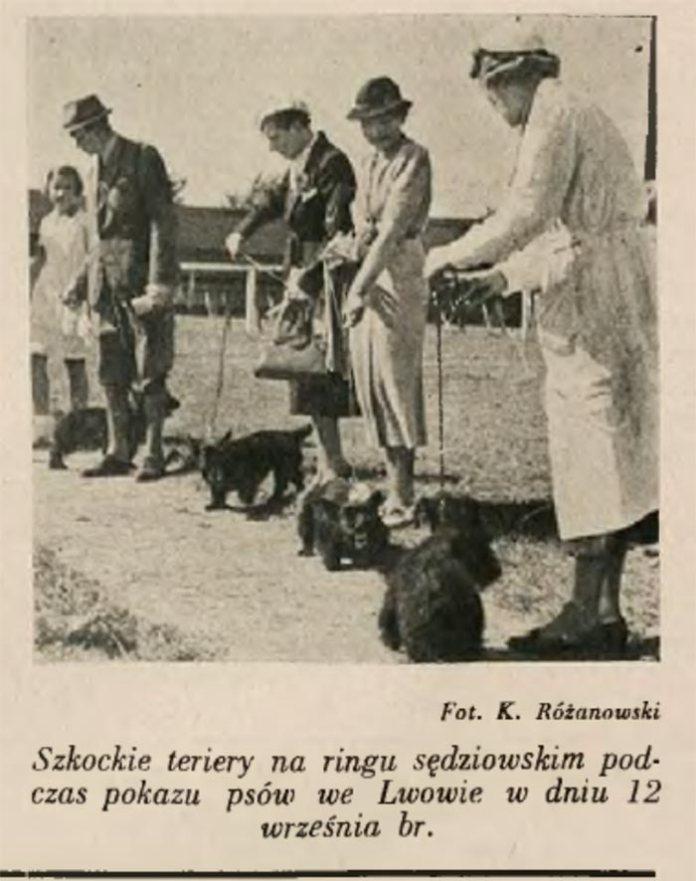 Фрагмент виставки собак у Львові 12 вересня 1937 року