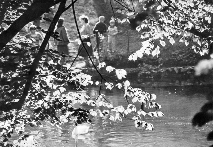 В Стрийському парку. Фото 1980-их років