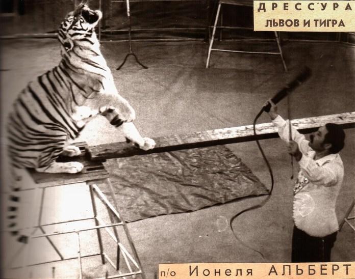 Дресура левів і тигрів під керівництвом Іонеля Альберта