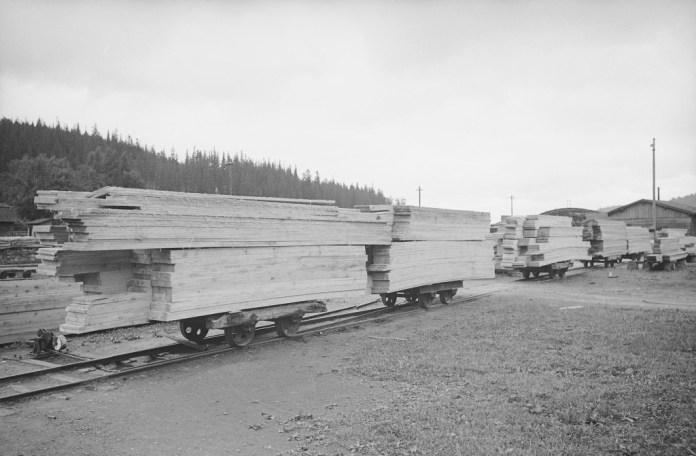 Вирубка лісу. Сколе, 1930-ті рр.