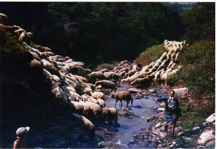 """""""В тихий вечір вівці біля броду…"""", 1975 рік. Світлив Олександр Кіцера"""