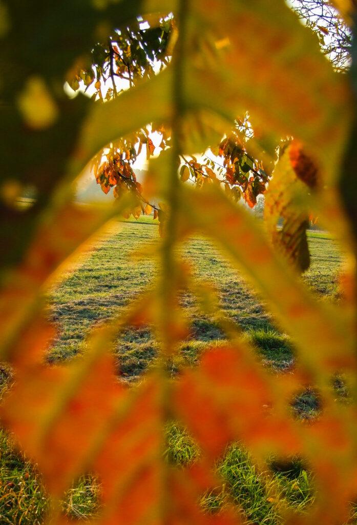 DAs Bild zeigt den Blick dutch ein buntes Herbstblatt auf weirer bunte Herbstblätter und grüne Wiese
