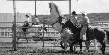 Millarville Rodeo
