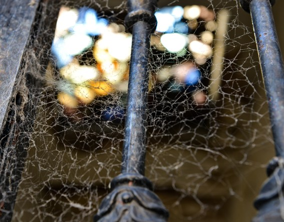 Webbed Light
