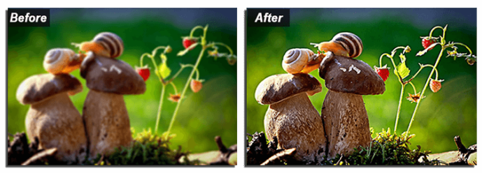 How to Sharpen a Blurry Photo - 5 Ways to Edit Blurry Images