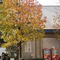 銀杏: ginkgo tree in Shibuya