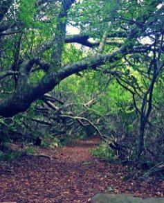 NewlandsForest-IMAGE (1)