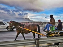 Cart-Horses-Adams (40)