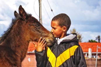 Foal-visit (53)