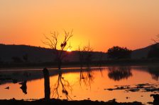 Sunrise-Madikwe Game Reserve