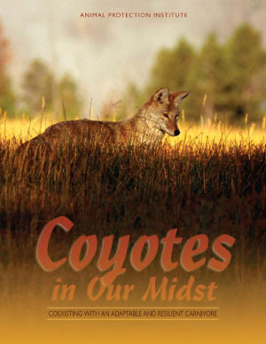 Coyotes in Our Midst: Coexisting with an Adaptable and Resilient Carnivore