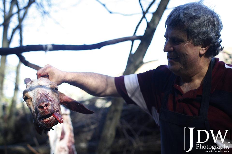 101010_JDW_Slaughter_1391