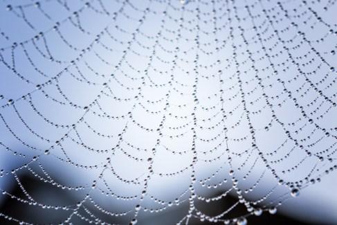 Wet Web 5