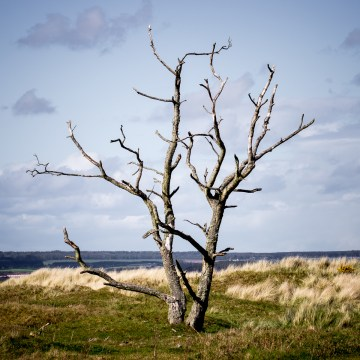 Tentsmuir Skeleton Ⅲ