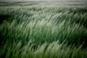 Fields of Green Ⅲ