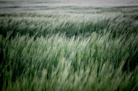 Fields of Green Ⅵ
