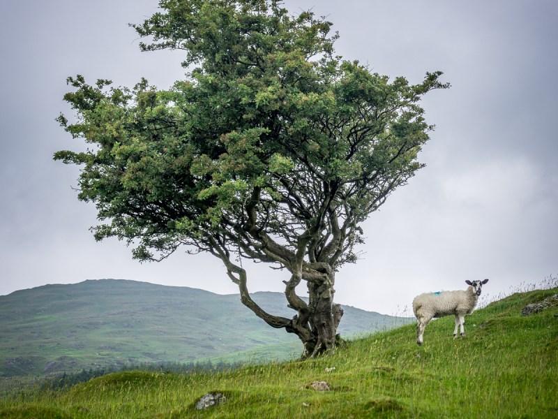 Cumbrian Scenery IV
