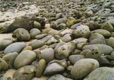 Elephant Seal in Rocks