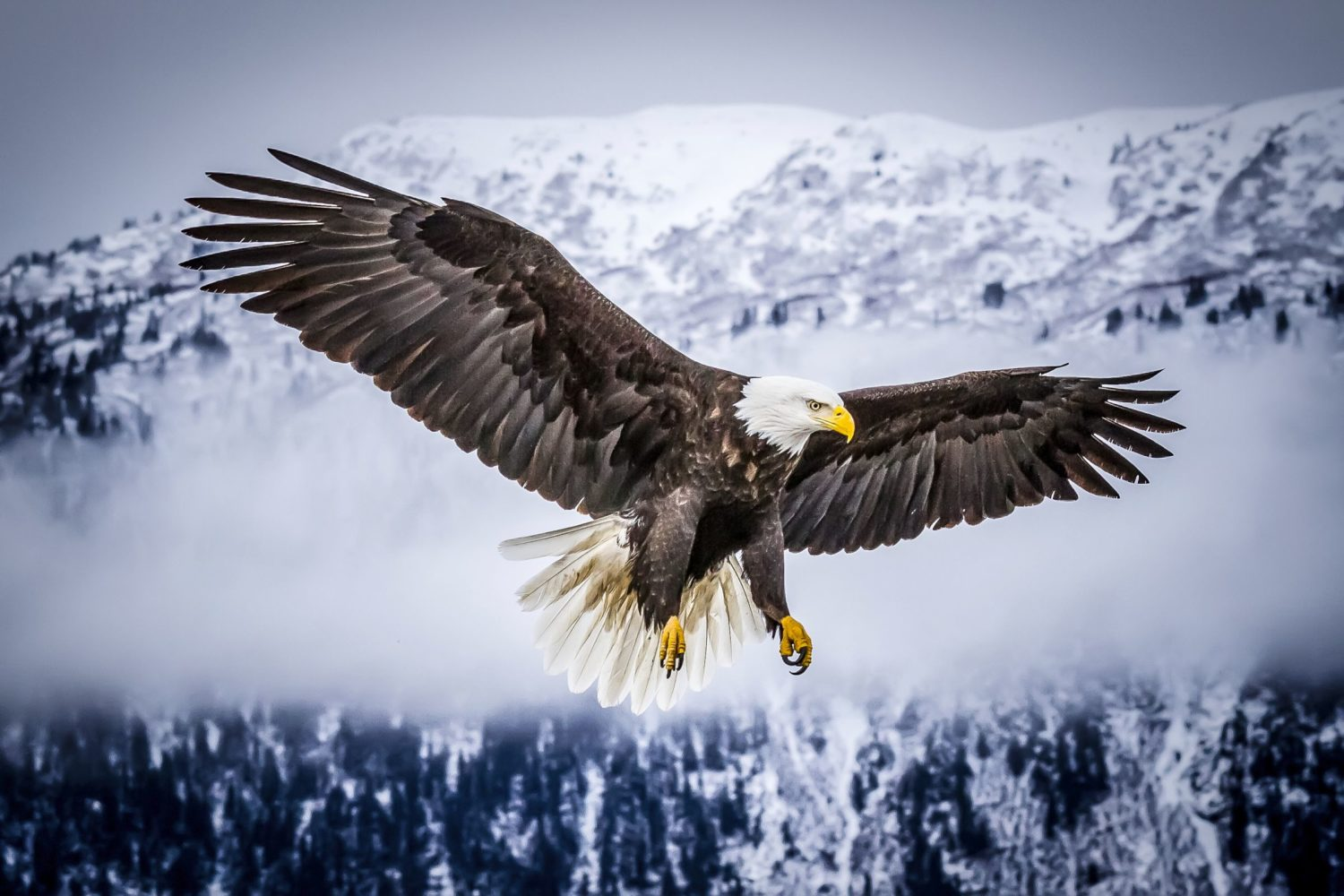 1st place, Avian category, Lew Abulafia
