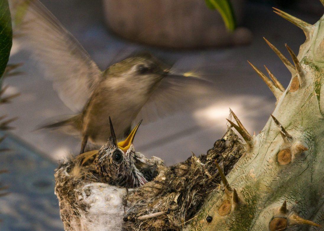 Honorable Mention, Avian category, John C. Preves