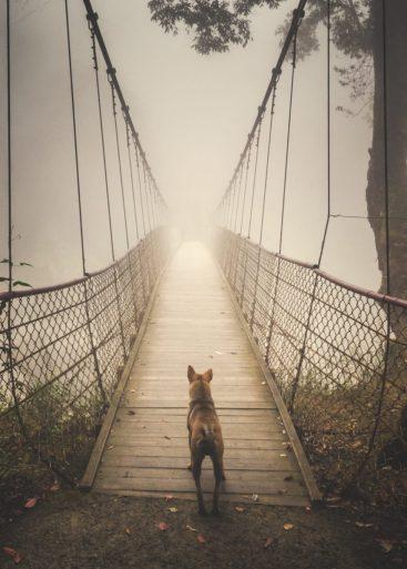 "1st place, Travel category: ""Stray Dog"" by Shuwen Lisa Wu"