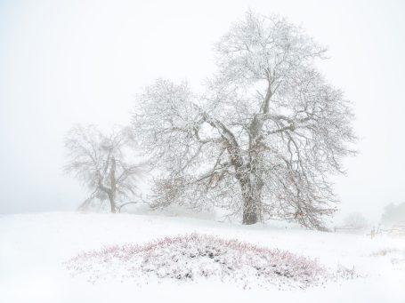 Honorable mention, Landscape category: Alexander S. Kunz