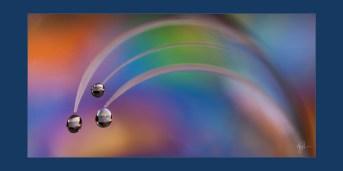 Rainbow Dew