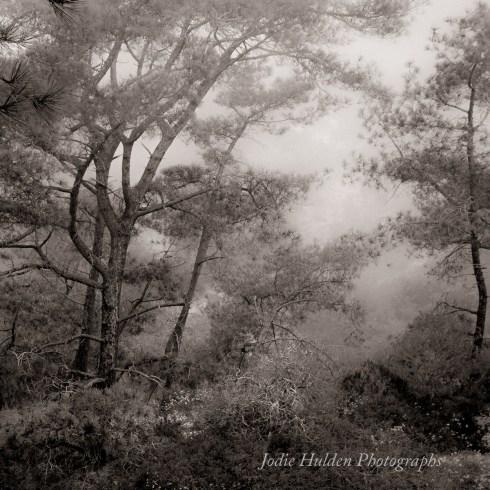The Space Between by Jodie Hulden
