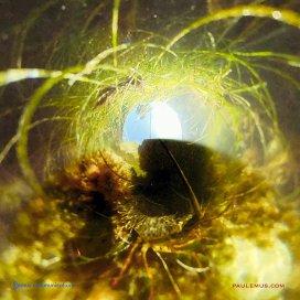 Paul Emus - Tide Pools