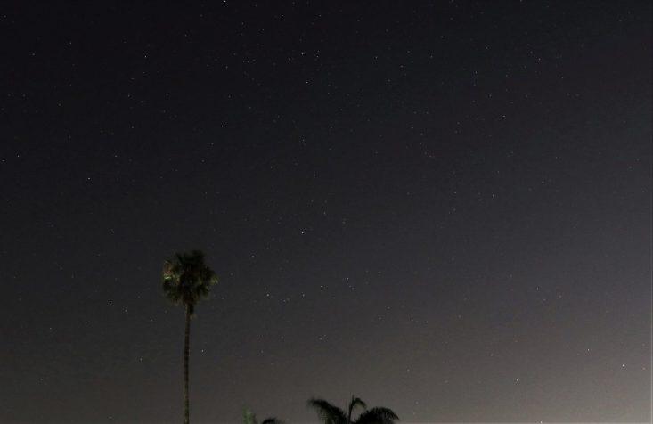 Barbara Whitman - Palms at Night