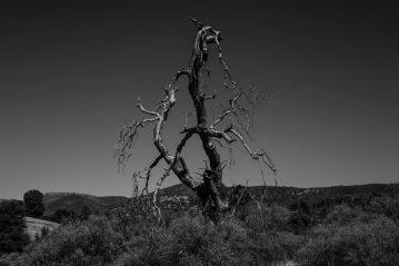 Randy Siegel - Dead Tree