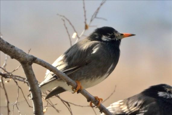 鳥_0216_005