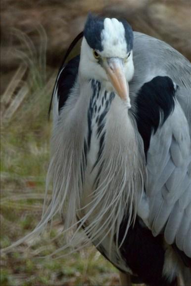 鳥_0216_008